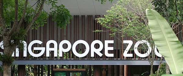 zoo-singapur